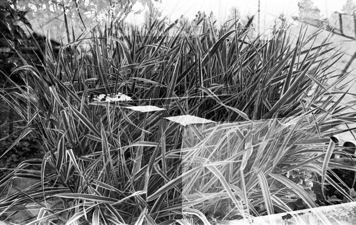 Long Grass 2012